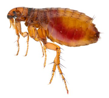 Let's talk about fleas and ticks