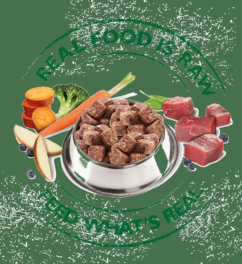 Introducing Raw Feeding